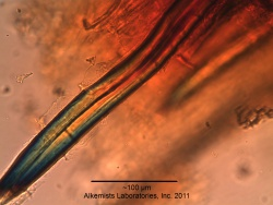 Cinnamomum verum (bark) - AHPA Botanical Identity ...